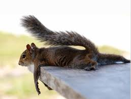 Chillin' Squirrel
